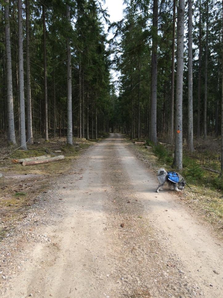 Tråkig skogsväg